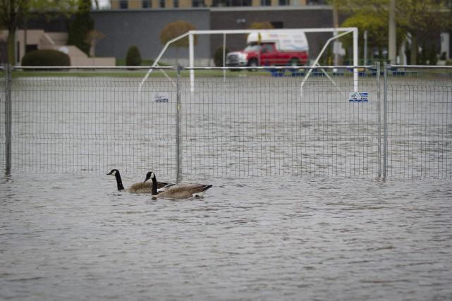 Les canards ont substitué les joueurs de soccer... (La Presse)