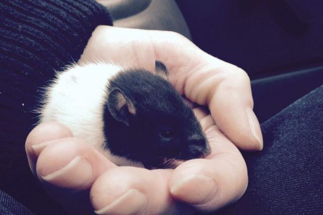 La souris, surnommée Snuggles, avait consommé une partie... (PHOTO PC)