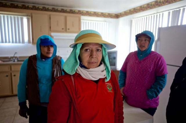 Ces trois travailleuses agricoles ont accepté de raconter... (Photo André Pichette, La Presse)