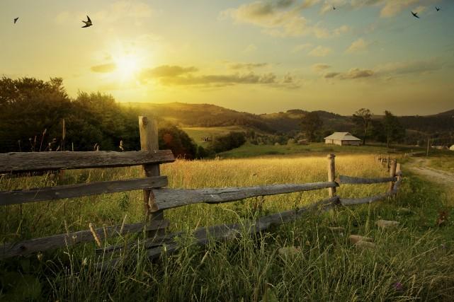 Le nombre de fermes a chuté de 16%... (123RF)