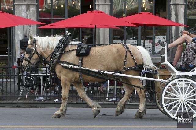 La pétition indique que les chevaux sont parfois... (PHOTO ROBERT SKINNER, ARCHIVES LA PRESSE)