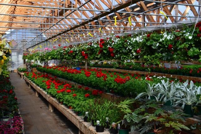 L'horticulture, qui comprend la culture des légumes et des petits fruits, mais...