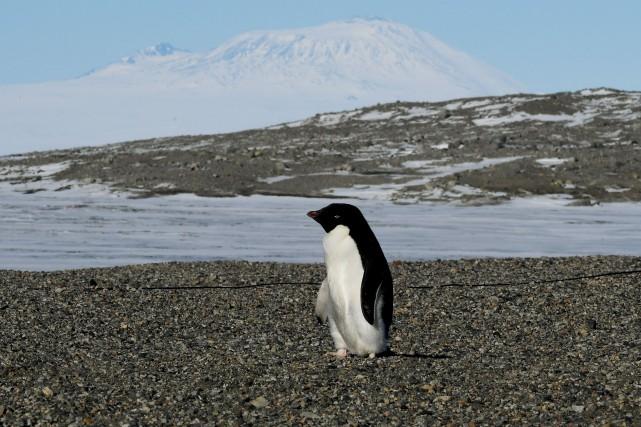 Selon Alain A. Grenier, professeur en tourisme et... (Photo Mark Ralston, archives AFP)