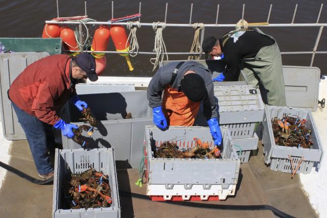 Le stock de homard est en excellente santé,... (collaboration spéciale Gilles Gagné)