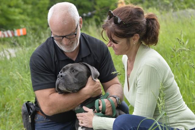 Marcus, le chien retrouvé errant et amaigri à... (PHOTO SPECTRE MÉDIA, MAXIME PICARD)