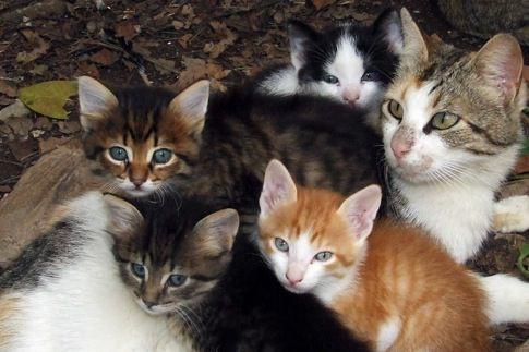 Sainte-Brigitte-de-Laval et de Lac-Delage préfèrent stériliser les chats... (Photothèque Le Soleil)