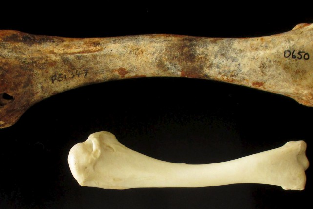Cette photo montre un os de de dindon... (AFP)