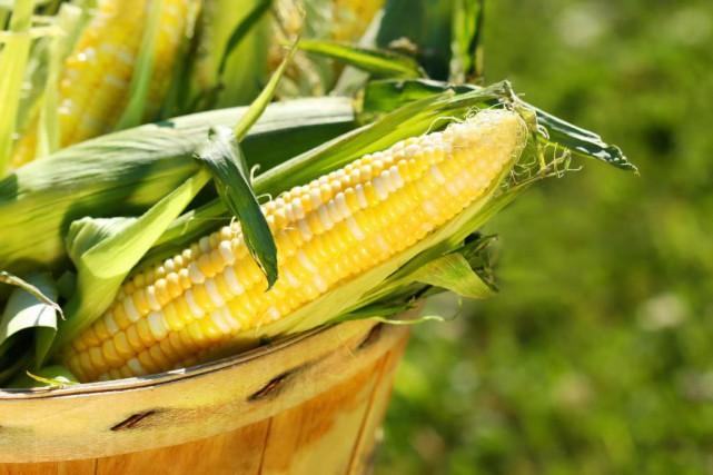 Protégé par une appellation d'origine contrôlée, le maïs... (Photo Thinkstock)