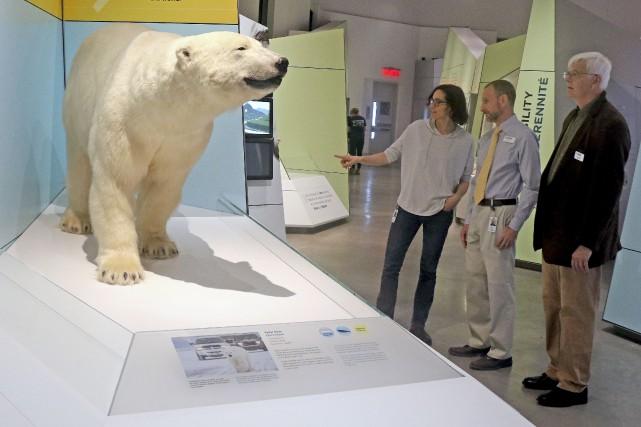 La nouvelle Galerie Arctique du Musée canadien de... (Patrick Woodbury, Le Droit)