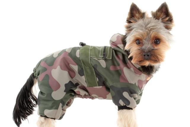 Le chien n'aura pas conscience qu'il a une... (Photo 123RF)