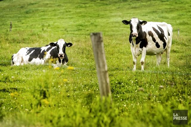 Certains pensent que les fermes du Québec et... (Archives, La Tribune)