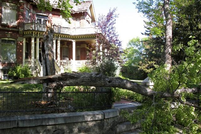 Un arbre s'est affaissé dans la ville de... (PHOTO AP)
