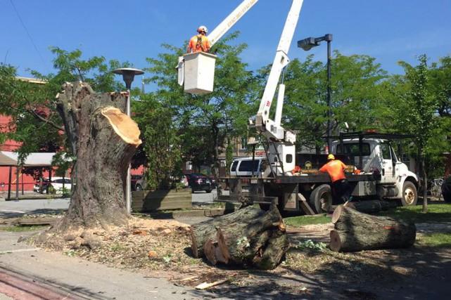 Le parc des Braves du centre-ville de Magog a changé un peu d'allure, mercredi... (Spectre Média, Jessica Garneau)