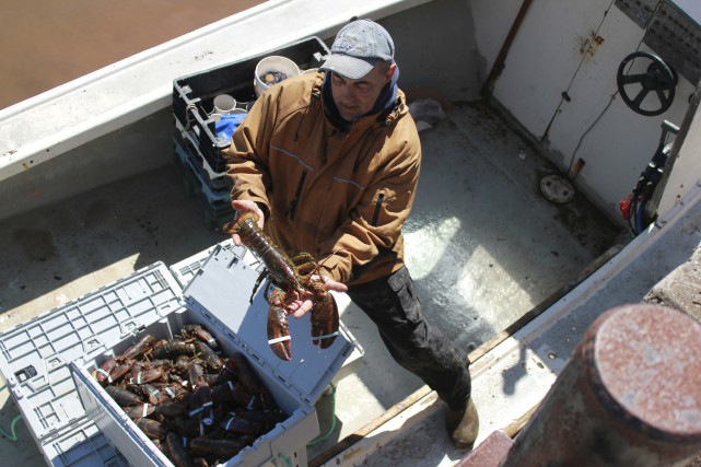 Les homardiers gaspésiens ont enregistré un cinquième record... (collaboration spéciale Gilles Gagné)