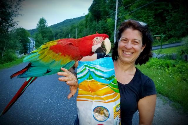 Paco le perroquet est rentré à la maison... (fournie par Genevieve Charest.)