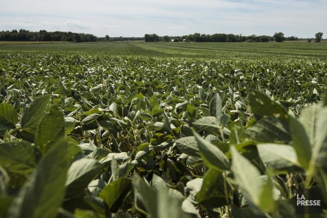 Selon ces agriculteurs les mesures annoncées «augmenteront significativement... (PHOTO HUGO-SÉBASTIEN AUBERT, archives LA PRESSE)