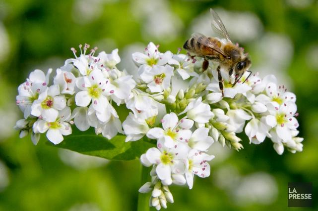 Parmi les pesticides qui seraient interdits, trois appartiennent... (Archives La Presse, David Boily)