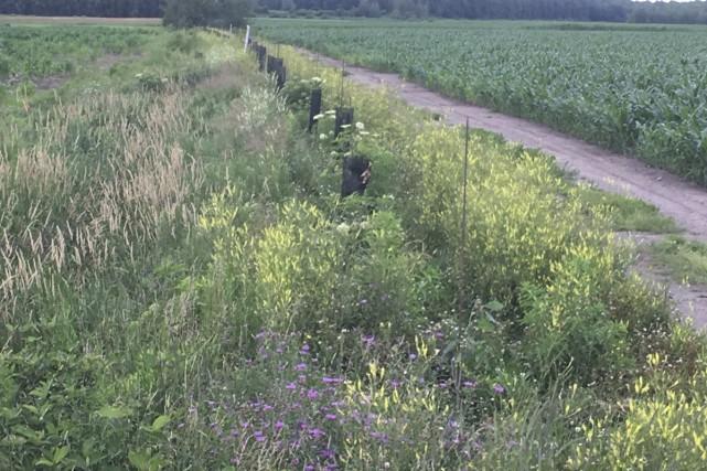 L'aménagement de bandes riveraines fleuries le long du... (fournie)