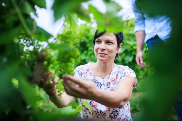 Mylène Gaudette en plein travail dans les vignes... (Photo Edouard Plante-Fréchette, La Presse)