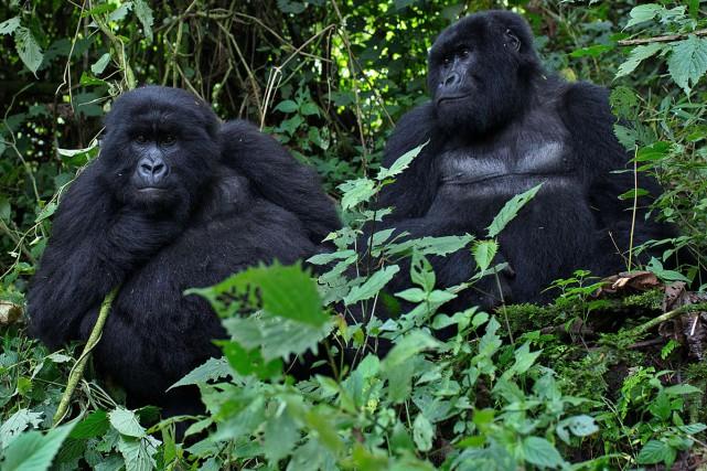 Les autorités rwandaises n'entendent plus se contenter de... (PHOTO ARCHIVES AFP)