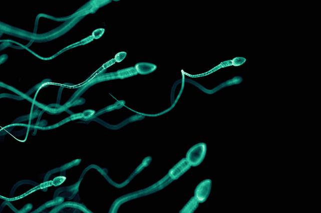 fertilit d clin alarmant du nombre de spermatozo des philippe mercure sant. Black Bedroom Furniture Sets. Home Design Ideas