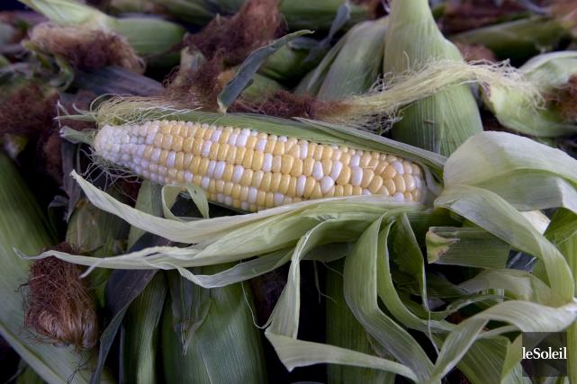 Le maïs sucré de Neuville, qui vient d'arriver... (Le Soleil, Jean-Marie Villeneuve)