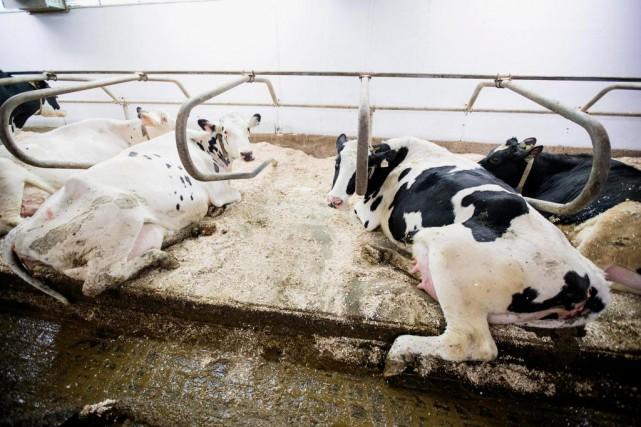 Les producteurs laitiers du pays sont inquiets du... (PHOTO ALAIN ROBERGE, Archives LA PRESSE)