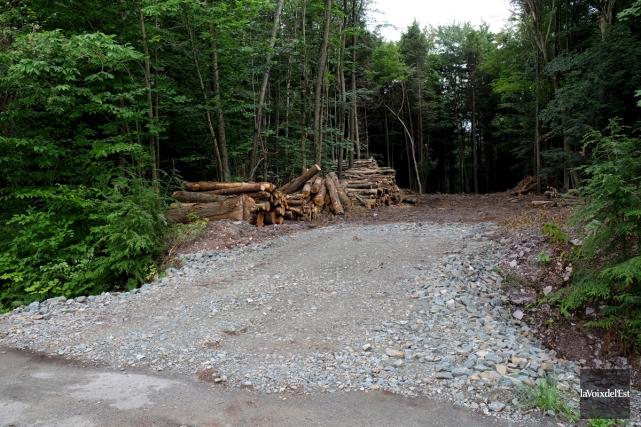 Les travaux d'abattage d'arbres entrepris pour la Ville... (Alain Dion, La Voix de l'Est)