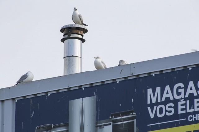 Dès la mi-août, les nids devraient être déplacés... (Olivier Croteau)