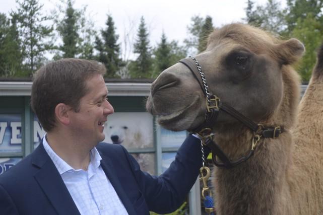 Le chef du Parti conservateur, Andrew Scheer, s'est... (Photo Le Progrès, Louis Potvin)