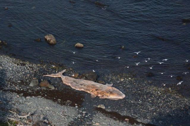 Pêches et Océans Canada a confirmé que le... (Photo La Presse canadienne)