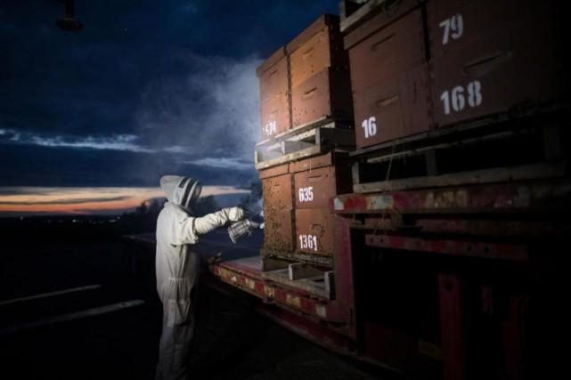 Un employé de la Miellerie de l'Estrieenfume les... (Photo Olivier Jean, La Presse)