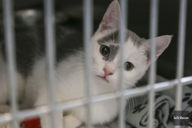 Il y a encore trop de chats dans... (Archives, La Tribune)
