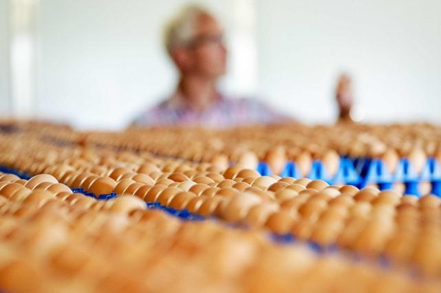 Les supermarchés néerlandais et allemands retiraient en masse les oeufs de... (PHOTO AFP)