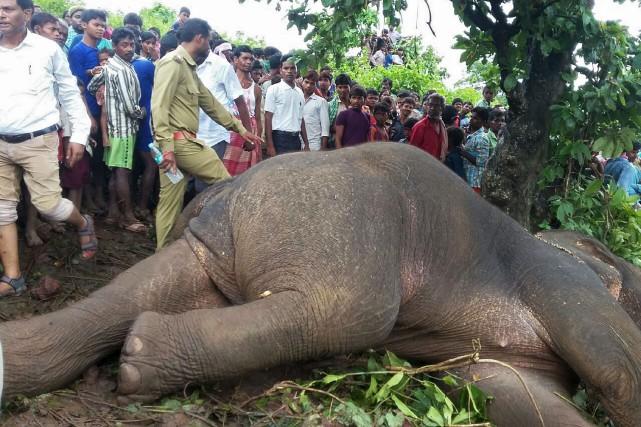 La décision de tuer le pachyderme a été... (AFP)