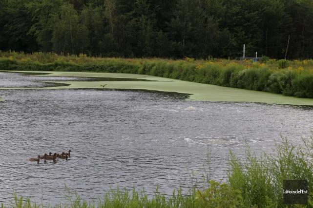 L'ensemencement de bactéries dans les étangs aérés a... (Janick Marois, La Voix de l'Est)