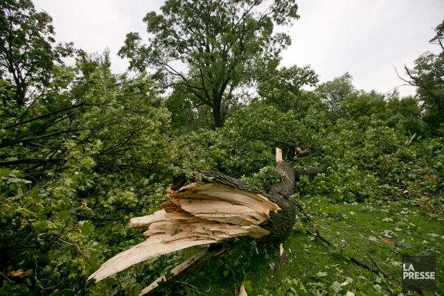 Des arbres cassés en deux au parc Girouard.... (PHOTO DAVID BOILY, LA PRESSE)