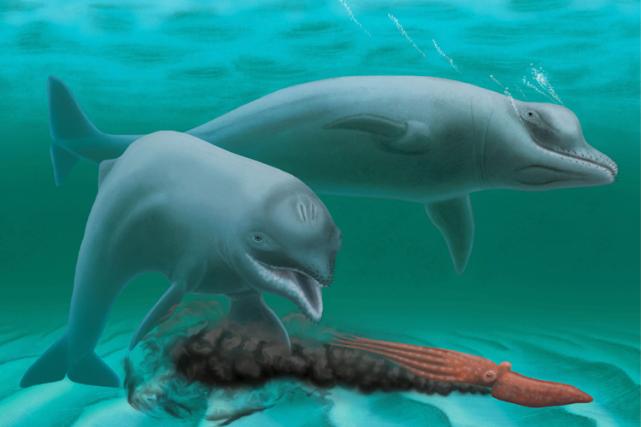 Le «vieux» dauphin était minuscule, sa longueur étant... (Image fournie par l'AFP)