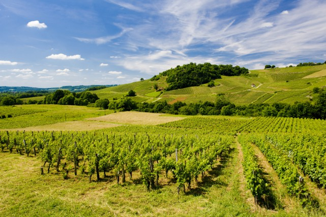Un vignoble près de Château-Chalon, au coeur du... (PHOTO THINKSTOCK)