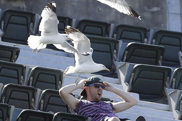 Un problème les goélands au stade? Parlez-en à... (AP, Ben Margot)