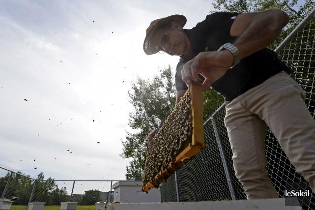 Douze ruches contenant 240000abeilles ont été installées mercredi... (Le Soleil, Yan Doublet)