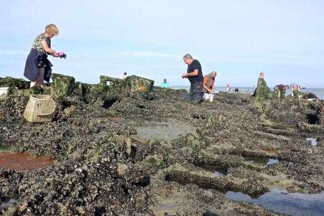 Des cueilleurs de moules au travail.... (Photo Jean-Christophe Laurence, collaboration spéciale)