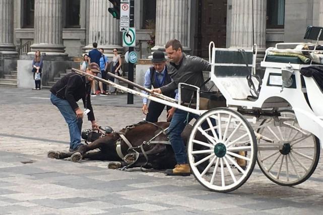 Un cheval s'est effondré lundi devant la place... (Facebook)