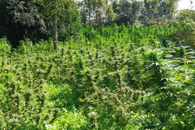 La saison des récoltes a pris son envol à la Sûreté du Québec en Outaouais avec... (Courtoisie, Sûreté du Québec)