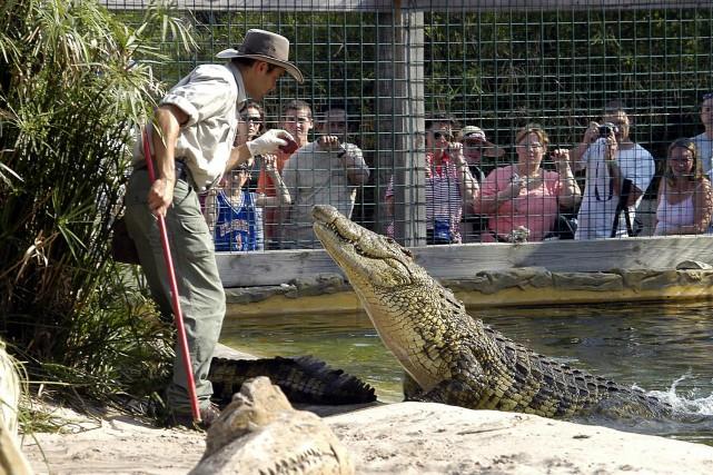 Une «vedette» du parc Gatorland, à Orlando.... (PHOTO FOURNIE)