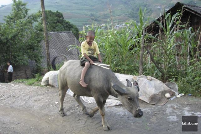 À Sapa, au Vietnam, les enfants s'amusent sur... (La Tribune, Jonathan Custeau)