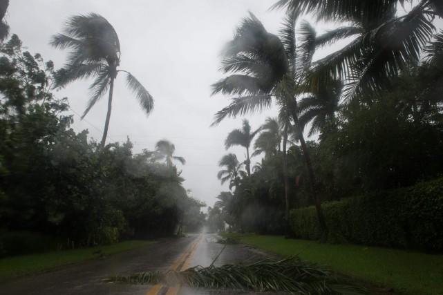 De nombreux palmiers ont été déracinés à Naples,... (AFP)