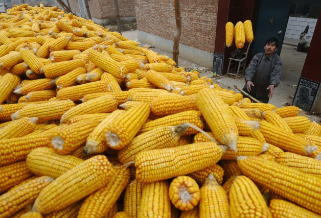 L'usage automobile du bioéthanol à base de maïs... (Photo d'archives : REUTERS)