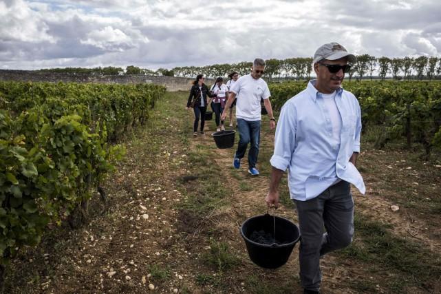 Dans un rang de vignes du clos Marey-Monge, un groupe composé d'Américains,... (PHOTO AFP)