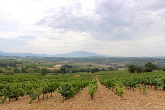 Le vignoble Clos Bellane dans le Rhône méridional.... (Photo Karyne Duplessis Piché, collaboration spéciale.)